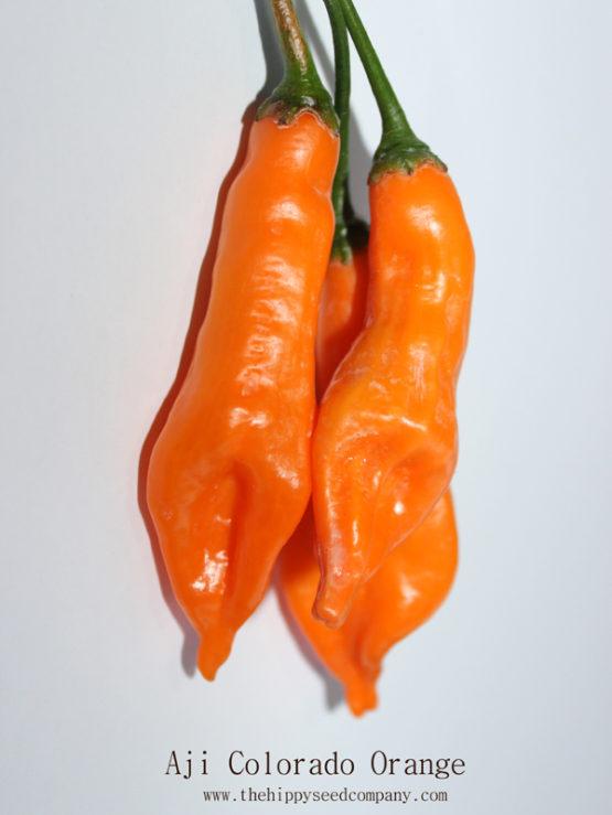 Aji Colorado Orange
