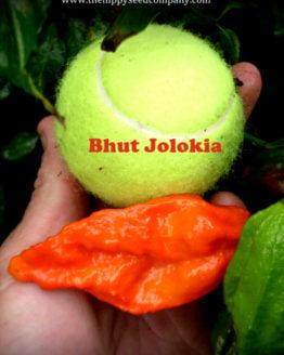 Bhut Jolokia