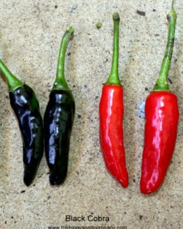 Black Cobra Chilli