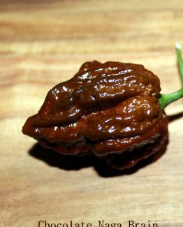 Chocolate Naga Brain