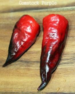 Comstock Purple Pepper
