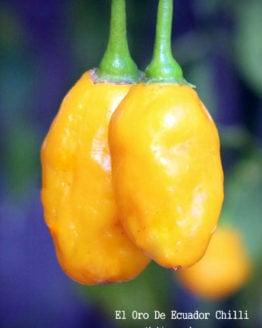 El Oro De Ecuador Chilli