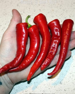 Maule's Red Hot
