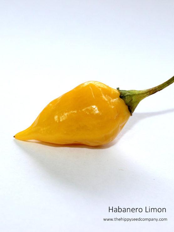 Habanero Limon
