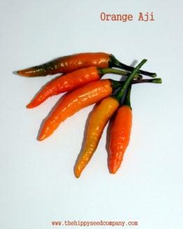 Orange Aji