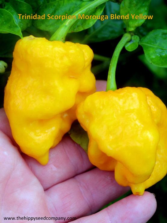 Trinidad Scorpion Morouga Blend Yellow