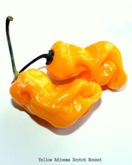 Yellow Adjoema Scotch Bonnet