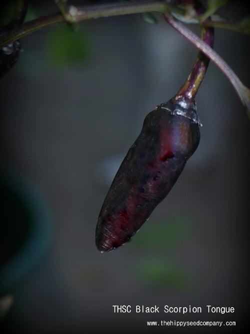 THSC Black Scorpion Tongue