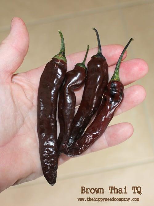 Brown Thai TQ Pepper