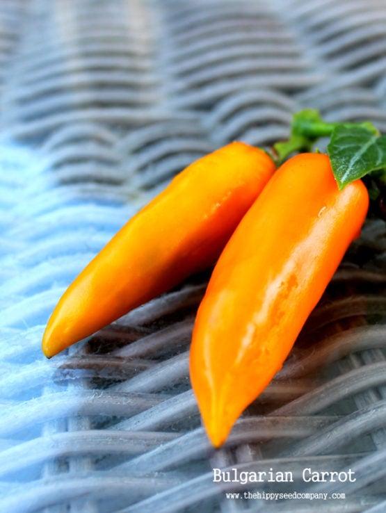 Bulgarian Carrot Chilli