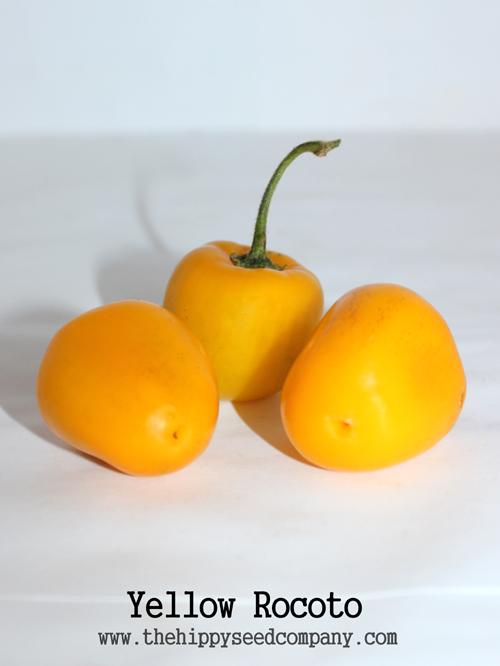 Yellow Rocoto