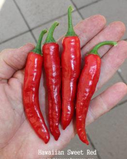 Hawaiian Sweet Red Pepper