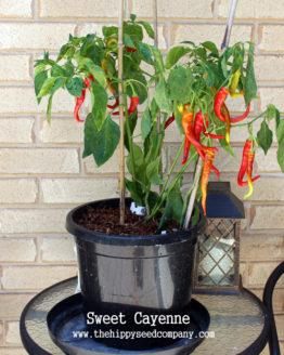 Sweet Cayenne Pepper