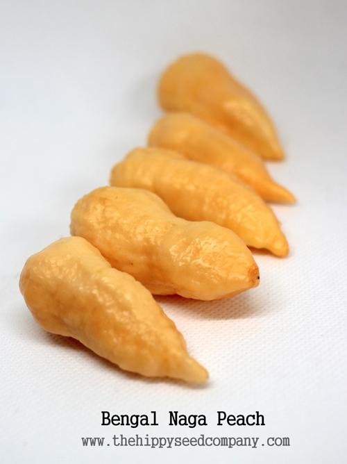 Bengal Naga Peach