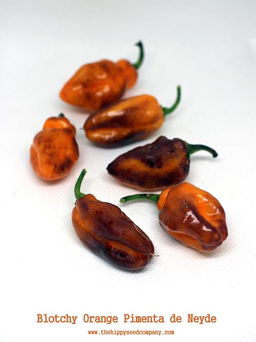 Blotchy Orange Pimenta de Neyde