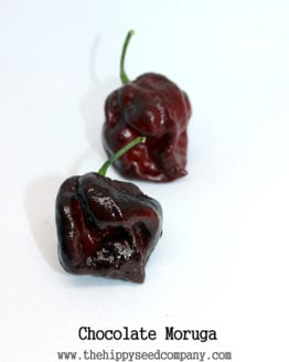 Chocolate Moruga Scorpion