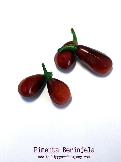 Pimenta Berinjela peppers