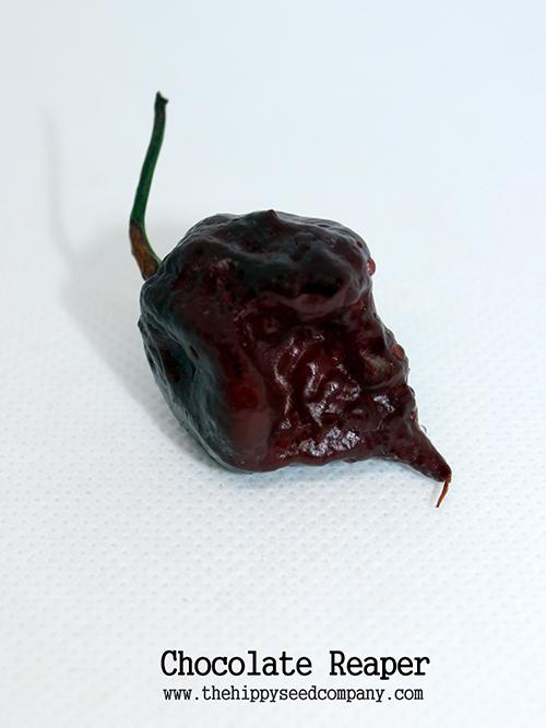 Chocolate Reaper