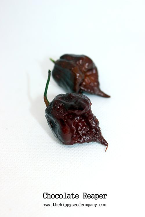 Chocolate Reaper » Chocolate Reaper