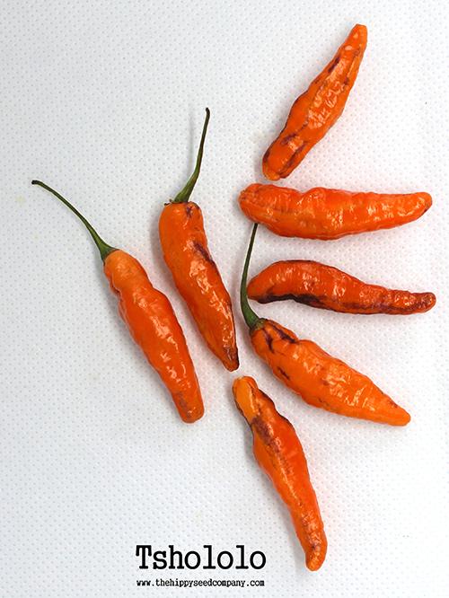 Tshololo Pepper