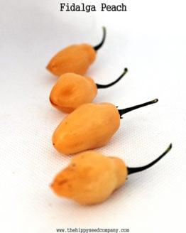 Fidalga Peach