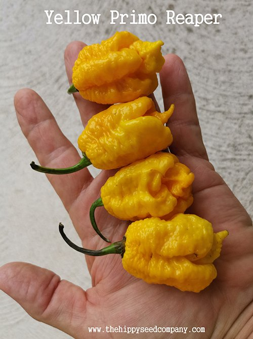 Yellow Primo Reaper
