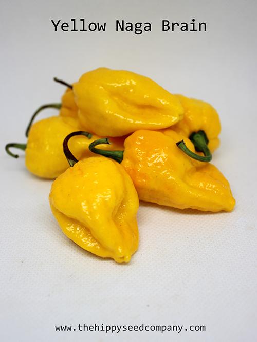 Yellow Naga Brain